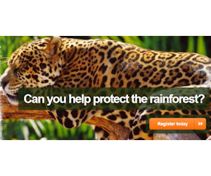 Sky Rainforest Rescue
